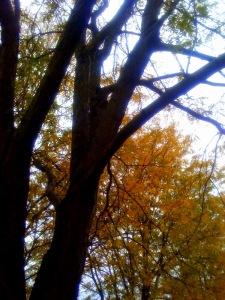 janet tree